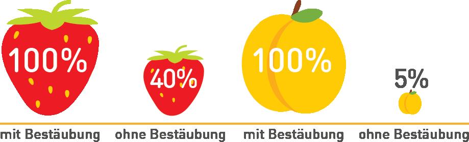 Bestäubungsleistung_Biene